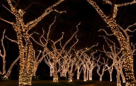 christmas light displays trees